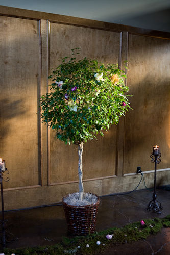 Ficus tree wired with flowers