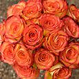 high and magic roses: close up
