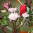 Spider mum, king protea, and tulip anthurium