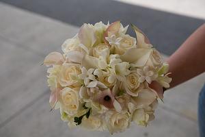 Brides_1_of_1