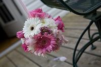 Ponmander_gerber_daisy_1_of_1_2